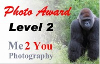 Level 2 Photo Award
