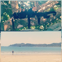 We have seen plenty of animals on our #CostaRica trip, but we were waiting for a monkey sighting.  There were plenty at #ManuelAntonio National Park. #babymonkey 3 beaches in one day. #beachday #allday #imsodark