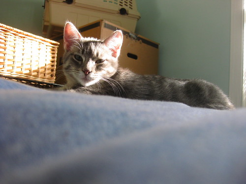 Solomon lounging