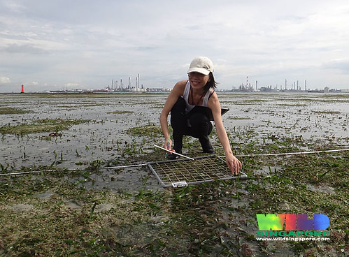 TeamSeagrass at work at Cyrene Reef