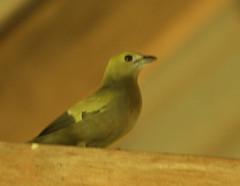 Guyana-8544