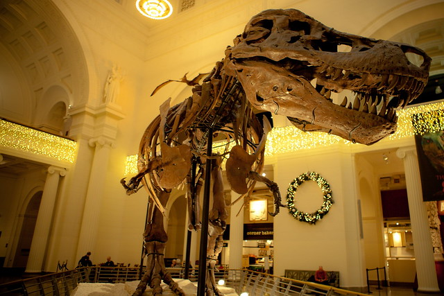 Chicago Field Museum Dinosaur Fossil Sue Sue The