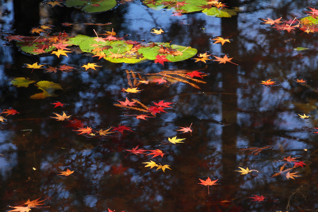 colored leaves on the water