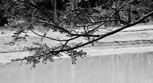 IMG_0003 Lake