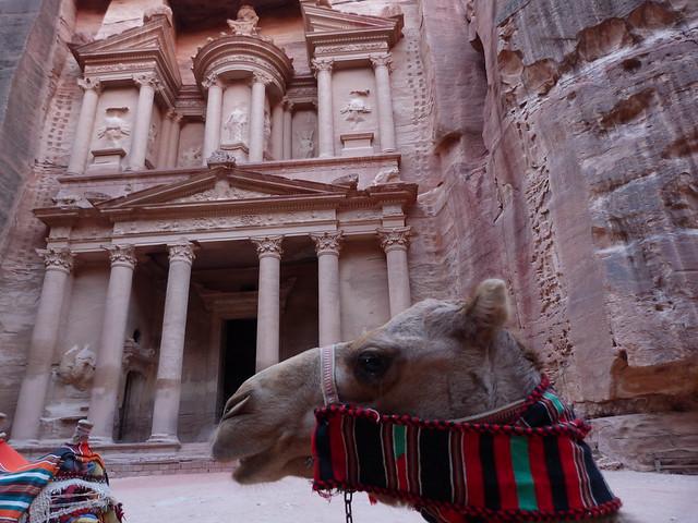 Camello y el Tesoro de Petra (Jordania)