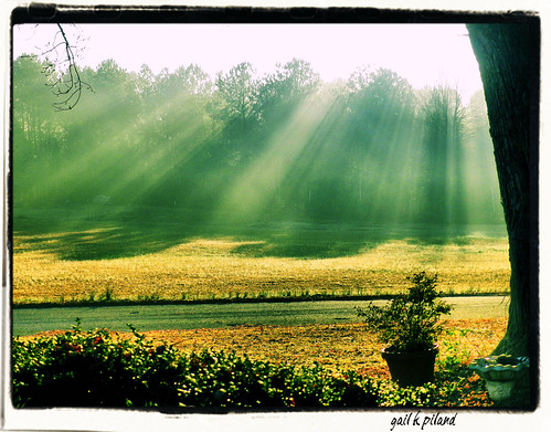 trees light sun mist field rays gailpiland bestcapturesaoi