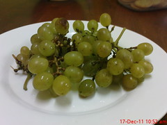 plant(0.0), zante currant(0.0), sultana(1.0), grape(1.0), produce(1.0), fruit(1.0), food(1.0),