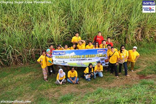 chuping sugar cane plantation4