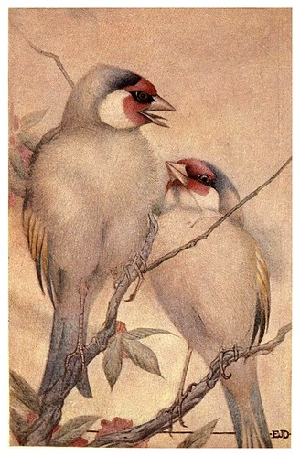 008-El jilguero cautivo-Birds and beasts 1911- Edward Detmold