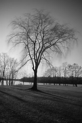 park county trees winter blackandwhite bw usa motion tree 30 river landscape movement december fort maine parks shy willow filter nd land halifax willows density kennebec winslow neutral