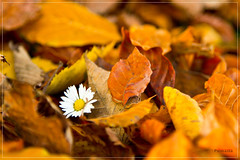 Autumn in Munich