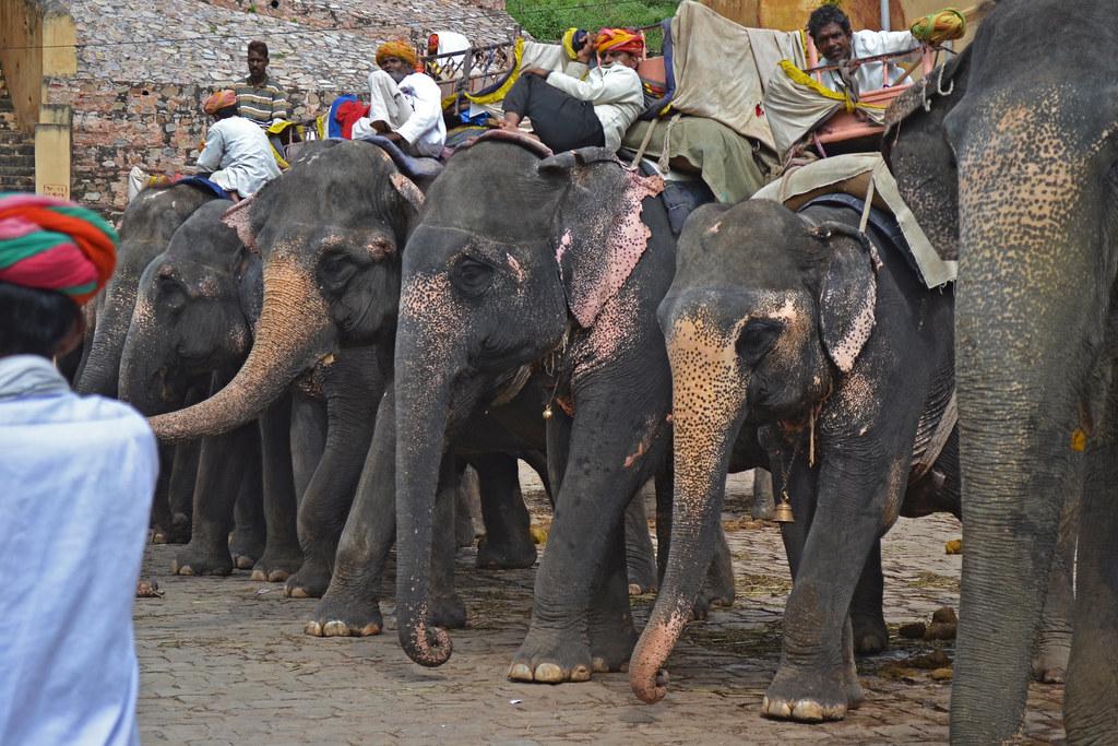 Слоновья парковка.