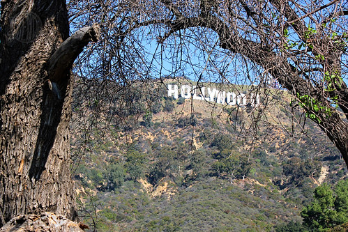 Hollywood sign through branches