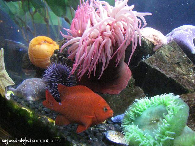 Denver Aquarium 11