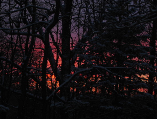 a sunset through the trees