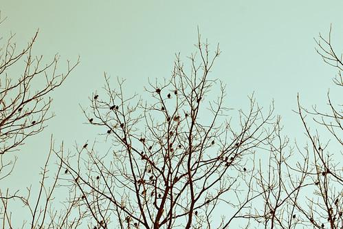 Consider the Birds by kentmastdigital