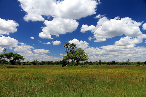 africa blue sky tree green clouds canon crossing view delta botswana moremi okavango southernafrica okavangodelta eos7d moremicrossing