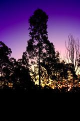 Twilight Splender