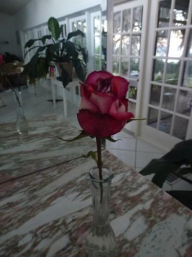 roses & fruit