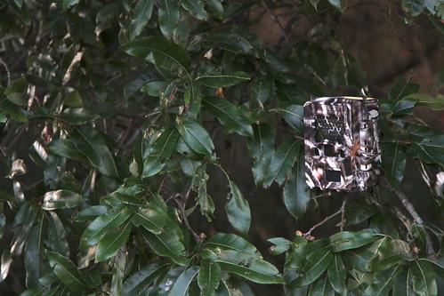 trail camera surveillance