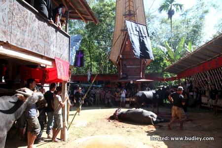 Tana Toraja (Indoensia)