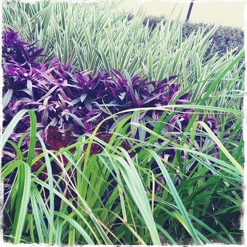 detail of a living wall at Whole Foods Kailua