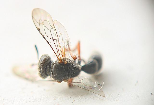 Dead Bugs Don't Fly