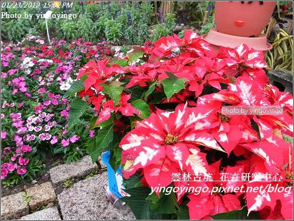 雲林古坑_花卉研究中心20120123_R0050659