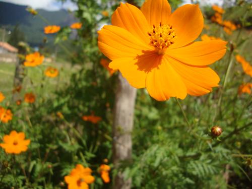 Flores em todo o caminho. P.3