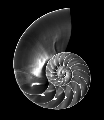 Nautilus shell by crackdog