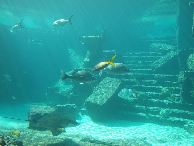 Bahamas Nassau Atlantis Aquarium Explore Sebd Ch 39 S