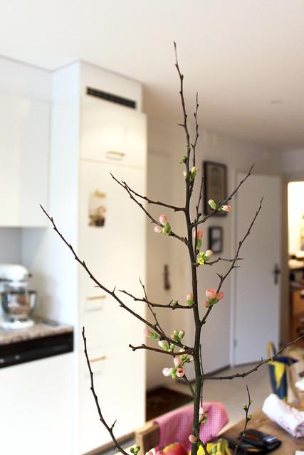 Zierquitte mit Frühlingsblust