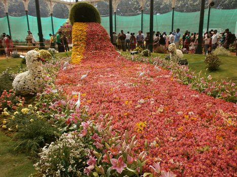lalbaghflowershow2012004