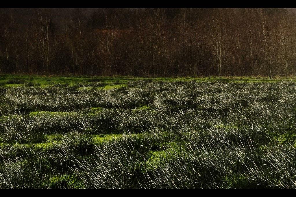 Pluie au marais (3249)
