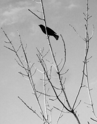 Bird Silhouette and Branches
