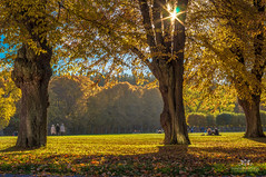 The park at Ulriksdals Slott in fall