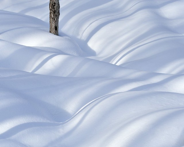 Tree, Snow & Shadows II