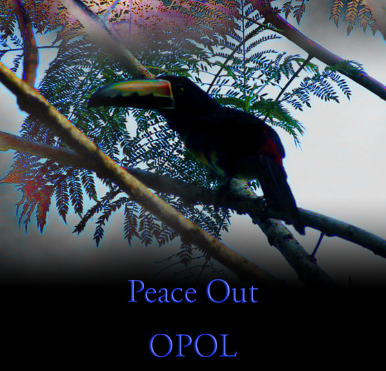 my-first-toucan-Peace-Out-OPOL