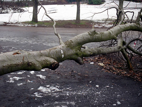 David Shrigley, Fallen Tree, 1996