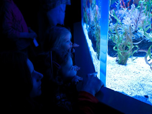 Peering into the tank