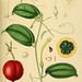 A hand-book to the flora of Ceylon. atlas.