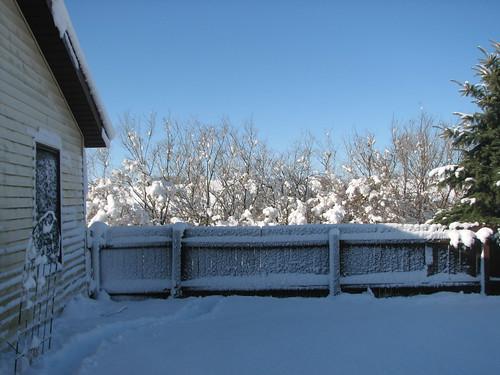 Snow Storm 11-29-11 9