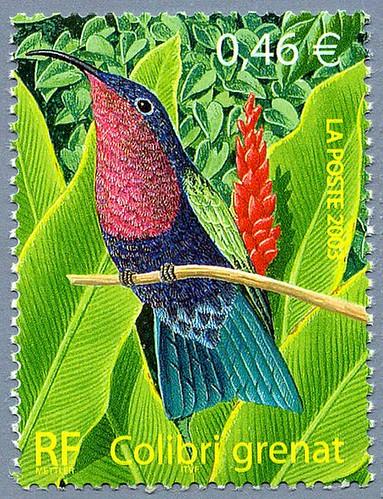 Colibri-grenat