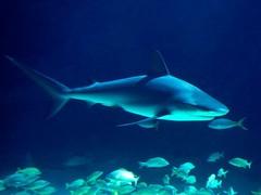 balıkların ortak özellikleri