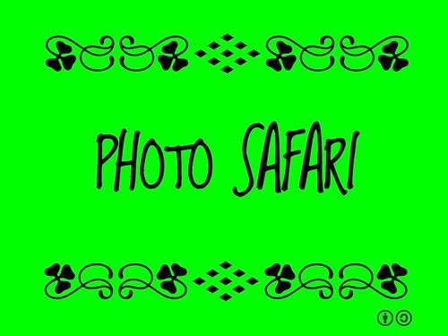 Buzzword Bingo: Photo Safari (2011)
