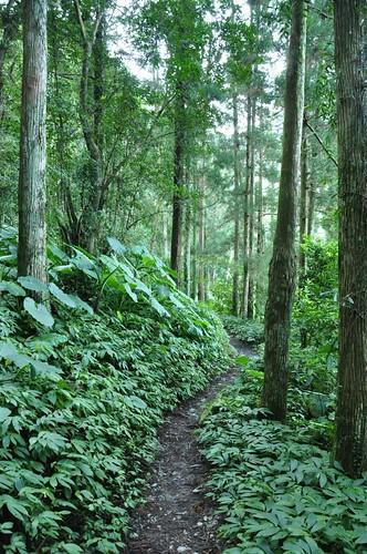 往雲森瀑布山徑