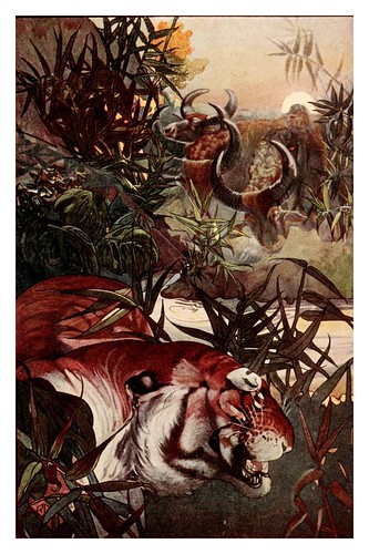 024-Shere Khan en la jungla- The jungle book 1913-Ilustrado por Edward Detmold