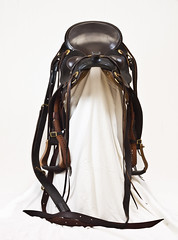 brown, leather, horse tack,
