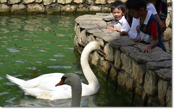 Swans & Kids