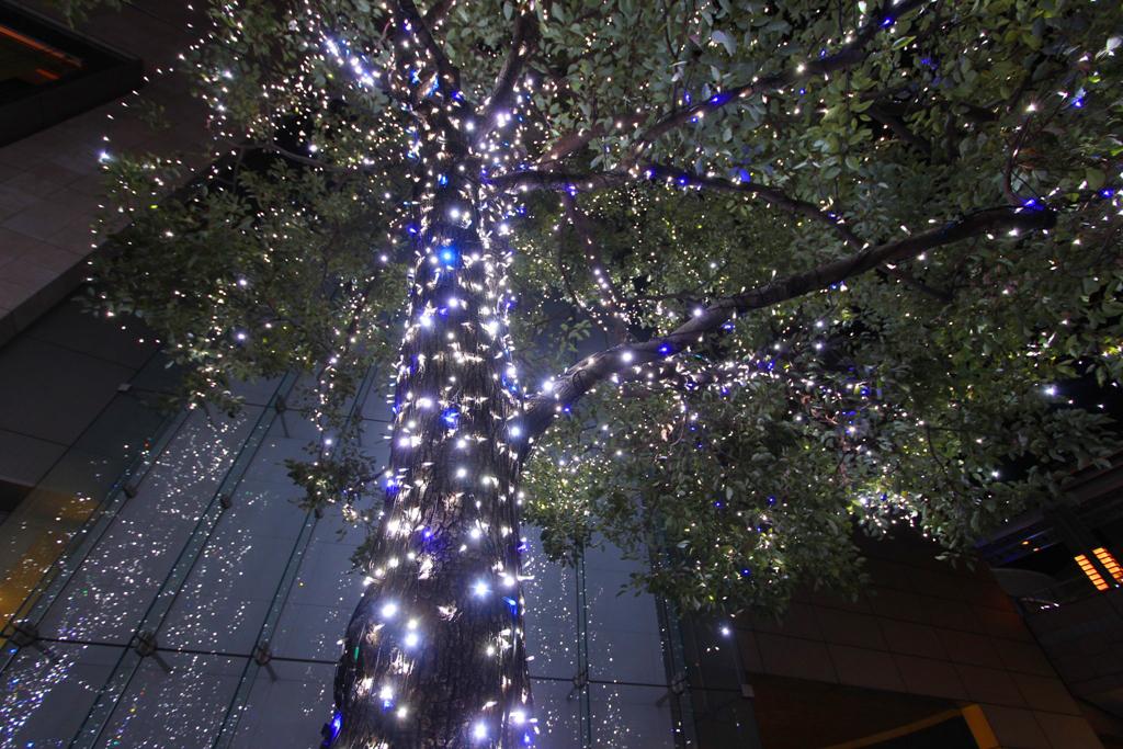 Roppongi Illumination 2011 (9)